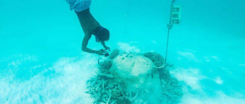Club Med Kani, aux Maldives - Un homme plongeant en apnée pour voir les coraux.
