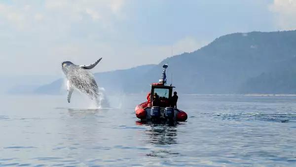 Activité observation des baleines